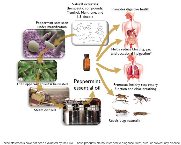 An Introduction To Essential Oils Jade Balden